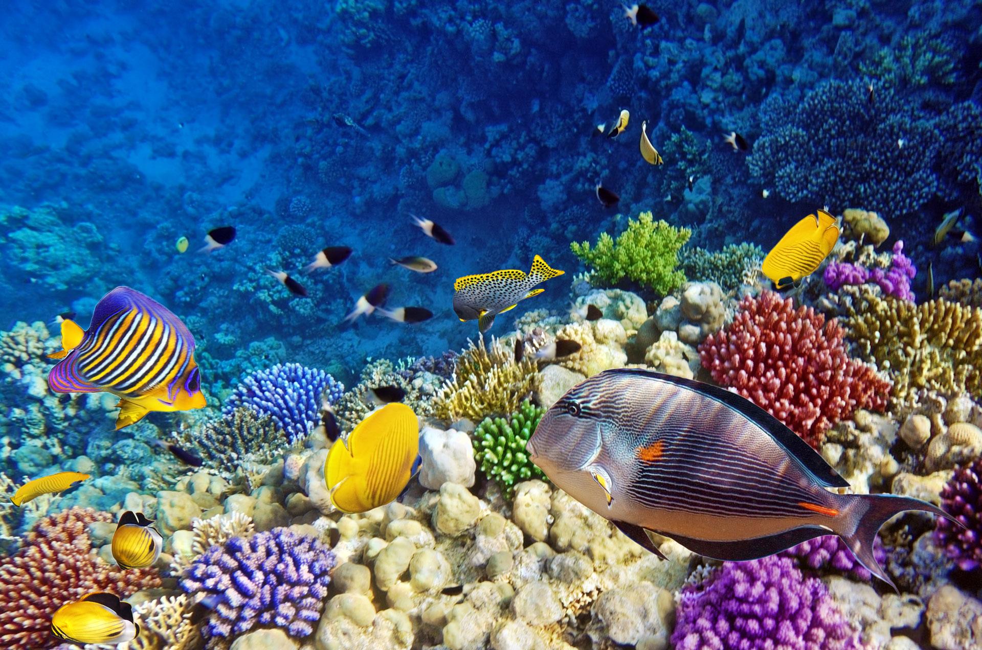 Jak fotit akvárium