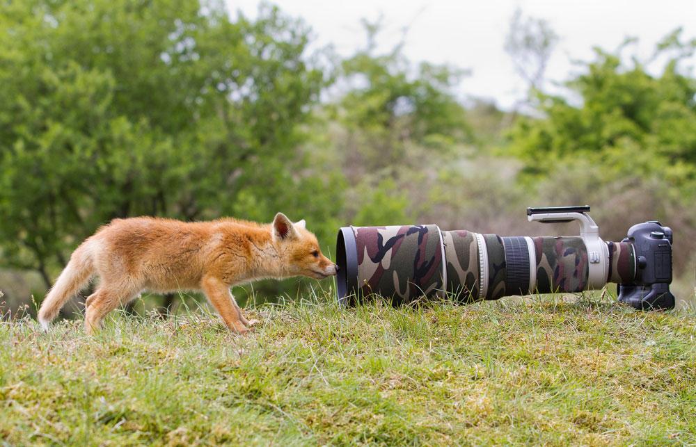 S jakým objektivem fotit divokou přírodu